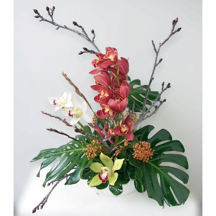 Florist Cymbidium Orchid Splendor