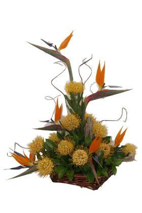 Florists Cape Splendour