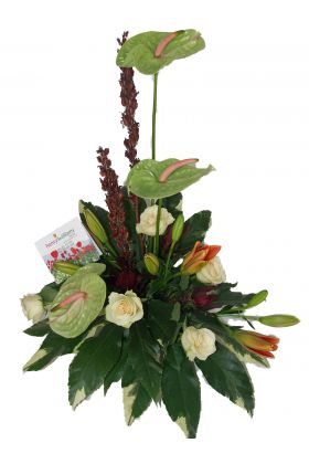 Florists Green Anthuriums in creative arrangement