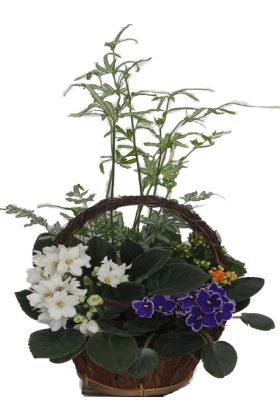 Violet and Fern Basket
